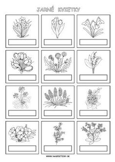 Spring Art, Spring Crafts, Carnival Crafts, Diy And Crafts, Crafts For Kids, Plant Science, Paper Birds, Spring Activities, Nature Journal