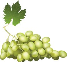 This high quality free PNG image without any background is about grape, berry, grapes, fruit, green grapes and food. Vides, Photoshop, Green Grapes, Png Photo, Belle Photo, Background Images, Clip Art, Fruit, Yandex Disk