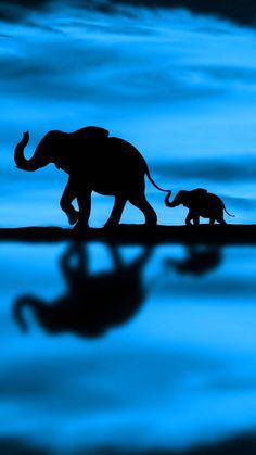 elephants shadow