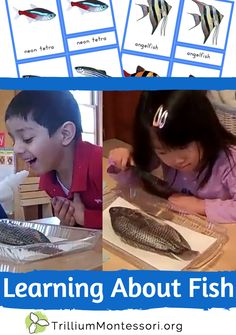 Learning About Fish (ideas for preschool and Montessori)