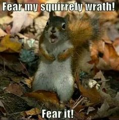 Fun Claw - Funny Cats, Funny Dogs, Funny Animals: Funny Animal Pictures With Captions - 33 Pics Funny Animal Quotes, Funny Animal Pictures, Animal Memes, Funny Animals, Cute Animals, Funniest Animals, Funny Sayings, Animal Pics, Animal Sayings