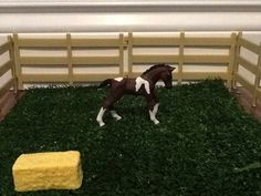 This is the 2014 Trakener foal.