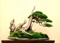 http://bonsaibark.com/wp-content/uploads/robert6.jpg