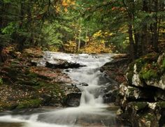 http://www.empoweringparks.com/White-Mountain-National-Forest.jpg