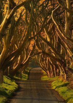 The Dark Hedges in Northern Ireland. I love my beautiful Northern Ireland, while out driving we turned a corner and into the most beautiful, stunning and mystical place. Oh The Places You'll Go, Places To Travel, Great Places, Places To Visit, Beautiful World, Beautiful Places, Voyage Europe, Belleza Natural, Northern Ireland