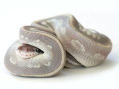Snakey!