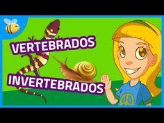 Animales Vertebrados e Invertebrados (Parte 1) - Aula365 - YouTube