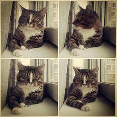 #cat #cats #markus #markuscat