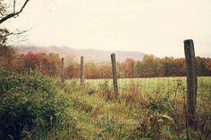 The Meadow - Photographic Print - Mountains, Mist, Appalachia, West Virginia, Snowshoe, Mountain, Autumn, Fall, Landscape, Decor, Green, bohemian, boho