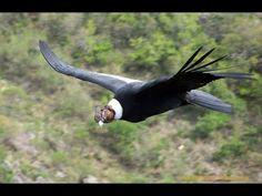 La Tierra Desde el Cielo   Sudamérica HD    Documentales