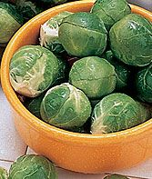 Dimitri Hybrid Brussels Sprouts Seeds and Plants, Vegetable Seeds at Burpee.com
