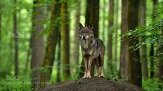 'King of the hill' by MarBre #animals #animal #pet #pets #animales #animallovers #photooftheday #amazing #picoftheday