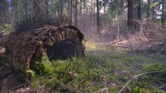 cinemagraph gif gif nature cinemagraph smoke perfect loop forest cinemagraphs moss log living stills