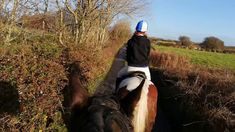Some students from GMIT Equestrian club came on a lovely long trek today. We had Sierra, Comanche, Reginald and Harry all out to stretch their legs. Riding Holiday, Show Jumping, Horse Riding, Trek, Equestrian, Vacations, Irish, Ireland, Ocean