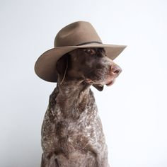 ifitwags:  My new hat from @treelineoutdoors. It looks almost as good on me as it does on Gus….almost.