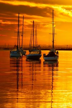 Sailboats in the golden yellow sky. Oh, that water. All of it. So pretty.