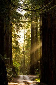 Redwood Road, California