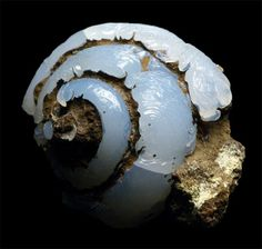Snail fossil that has completely transformed into Opal