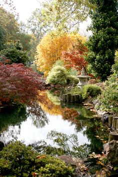 Reflecting pond in Japanese Garden