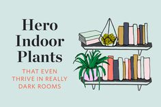 Hero Houseplants That Survive (& Even Thrive!) in Really Dark Rooms