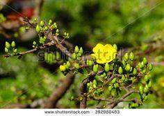Spring yellow flowers - stock photo