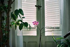 Flower in the morning by daiské, via Flickr