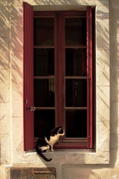 The most famous cat in Arles (by debbie_dicarlo)