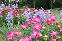 All the Dirt on Gardening: Peonies - Queen of the Garden Flowers