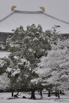 雪の東大寺 Todai-ji Temple in snow, Nara, Japan