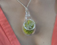 Air Plant Terrarium Pendant by hammer + vine. Carry a piece of living art near your heart. This lovely little terrarium can be worn as a pendant or hung in a window. Hand blown by glass artist Devin Mense in Portland, OR.