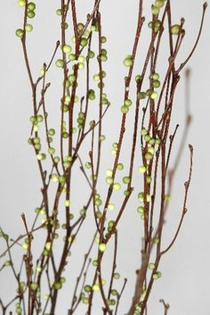 Natural Birch Branches with faux green huck berries 3-4 foot // $7.50