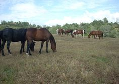 Adopting a Rescue Horse--What You Need to Know