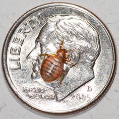 "You may find yourself faced with unpleasant situations such as a bed bug infestation.  Their signature bite resembles that of a mosquito's but is several bites in a straight line also known as the ""breakfast, lunch, and dinner"".  Bed bugs can live for months without food so be diligent in eradicating them once discovered.  One proven method is to use a bed cover, starving the bugs since they live in the mattress crevices."