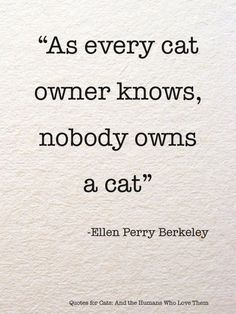 cat quotes 25 Inspirational Advice Given By The Pets In Your Life - I Can Has Cheezburger Cat Quotes, Animal Quotes, Funny Quotes, Cat Sayings, Risk Quotes, Crazy Cat Lady, Crazy Cats, Grand Chat, Image Chat