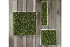 壁に掛ける絵が、絵じゃなくて本物の植物なら? 本物の植物なので室内プラントとして緑化できたら? そんな、クールというよりもワイルドと表現がふさわしい、本物のコケとシダ植物で造られたこちらの「Fern and Moss Wall Art」は、いえなかにジャングル感を加えてくれる一風変わったインテリア・アート。 コケ・オン...