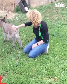donkey You are in the right place about Cutest Baby Animals in the world Here we offer you the Cute Funny Animals, Cute Baby Animals, Animals And Pets, Cute Dogs, Cute Babies, Farm Animals, Cute Animal Videos, Funny Animal Pictures, Funny Animal Gifs