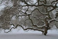 Image result for tree in winter