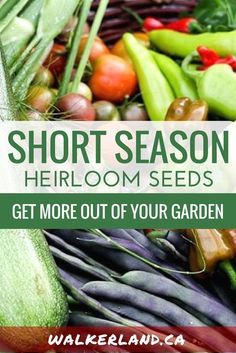 Short season, cold climate seeds & plants. Are your growing seasons getting shorter? Consider planting heirloom seeds that are adapted to shorter growing seasons and get more food out of your garden. This guide shares tips and offers a list of varieties for you to consider.