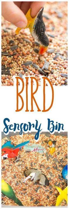 Bird Seed Sensory Bi