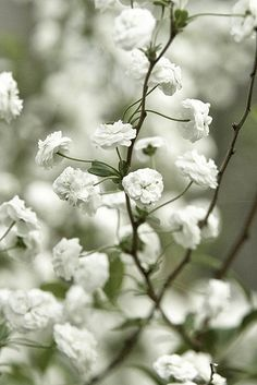 Reminds me of my Grandma Ruth...she had a bush/flower like this in her backyard. Miss her...