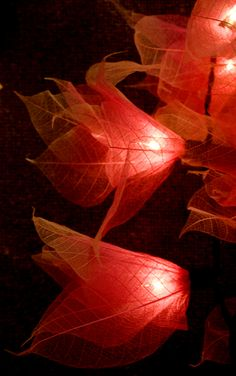 Skeleton leaf fairy lights. Cady would love these in the summer(: