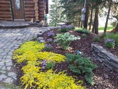 Shade tolerant perennials. Golden Creeping Jenny, Hostas & Carpet Bellflowers. Lakeside Cottages by Creative Landscape & Design.