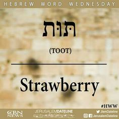 There are many ways to learn Hebrew and for many people it's all about flexibility, convenience and enjoyment. The reasons for learning a second or even third language will vary from person to person but generally the ability to commu Biblical Hebrew, Hebrew Words, Hebrew Quotes, Hebrew Writing, English To Hebrew, Learn Hebrew, Word Study, Torah, New Things To Learn