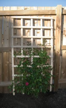 Trellises You DIY For Your Garden For Less Than $20: DIY $6 Flat Trellis