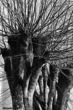 Les arbres en hiver | Françoise Larouge (2014)