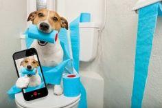 Wallpapers Dogs Smartphone Jack Russell terrier Animals Humor
