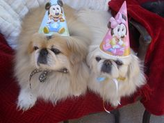 Barkley's Birthday Party