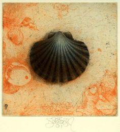 Etching by Jörg SCHMEISSER (1942 - 2012) via Tumblr Work In Australia, Australian Artists, Beach Art, Dresden, Printmaking, Sea Shells, Black And White, Prints, Starfish