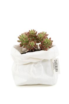 Uashmama Paper Bag - White - perfect for plants! Just place pot with saucer inside the bag.