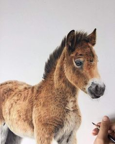 Exmoor Pony. Colored Pencils Realistic Animal Drawings. By Bethany Vere.